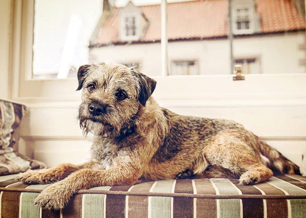 Est-ce qu'une clause interdisant d'avoir un animal en appartement est légale?
