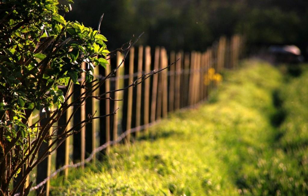 Est-ce que je peux couper les branches d'arbres de mon voisin qui dépassent sur mon terrain sans sa permission ?