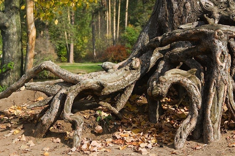 Est-ce que je peux couper les racines d'arbres de mon voisin qui arrivent sur mon terrain sans sa permission ?